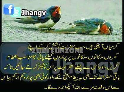 birds water need