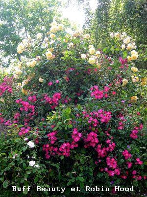 Conservatoire de Roses anciennes en Normandie