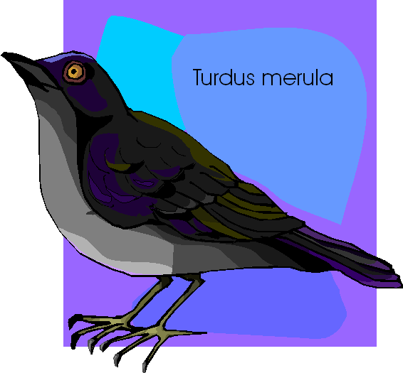 Common Blackbird Free Clipart | Turdus Merula