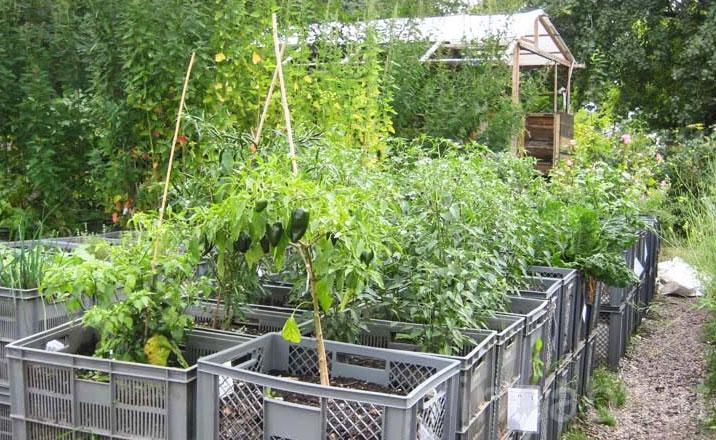 Jardinitis huerto urbano prinzessinnengarten for El jardin urbano