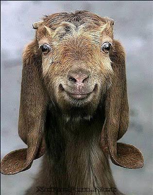 linda Imagenes chistosas de animales...