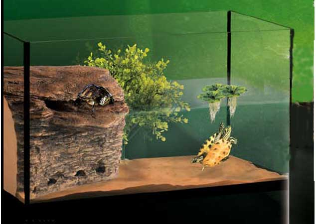 Your pet for Acuario tortugas
