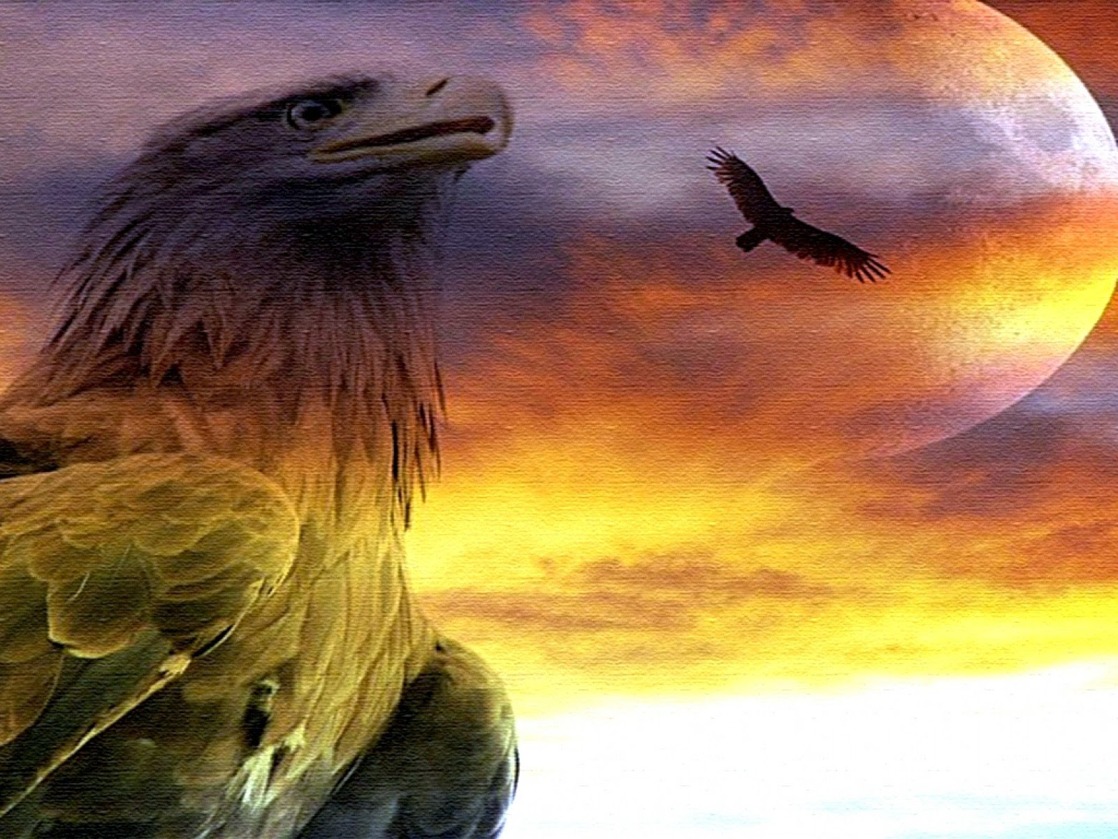 An Eagle In The Sky
