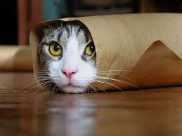 faze tari animale pisici