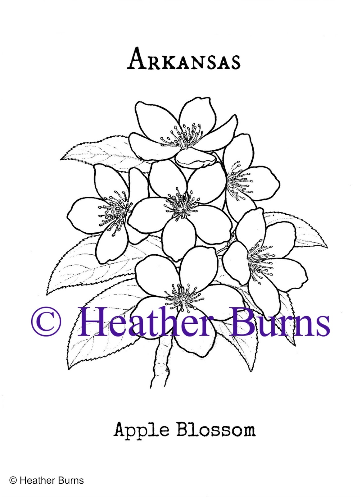 State flower coloring book november 2015 for State flower coloring pages