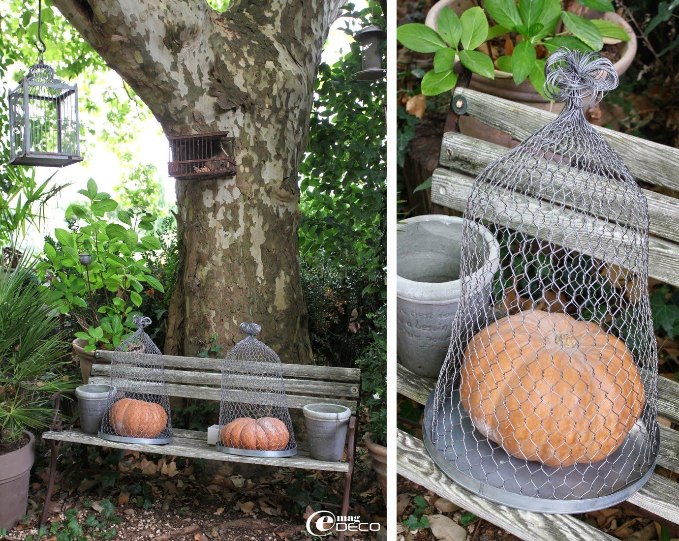 Cloches en grillage abritant des citrouilles, posées sur un banc dans le jardin d'Elsa Peyremorte