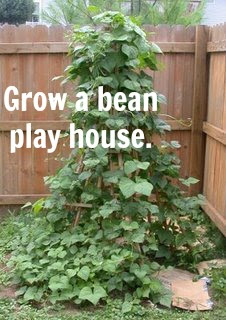 Garden Or Bean Pole Teepee