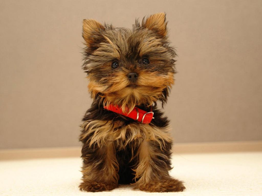 http://4.bp.blogspot.com/-4vCTbQOajWM/TlfHWURDYUI/AAAAAAAACVg/9OWeCLoLTFo/s1600/cute-puppy-wallpapers_12311_1024x768.jpg