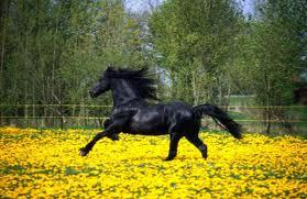 allergie paarden ogen