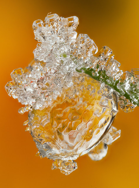FROSTED+ORANGE+DEWDROP+2012.jpg