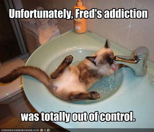 Funny pictures your cat is addicted to water