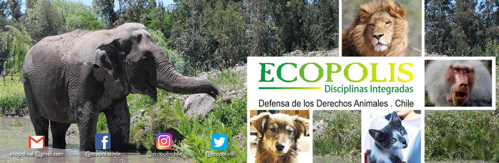 Ecopolis Disciplinas Integradas