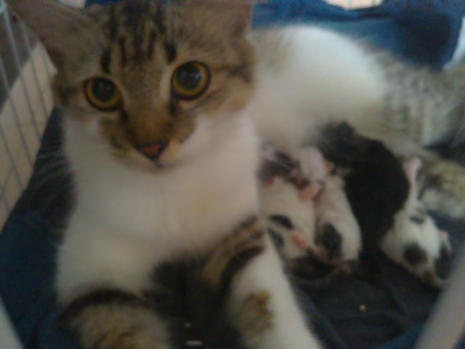 Jual Anak Kucing