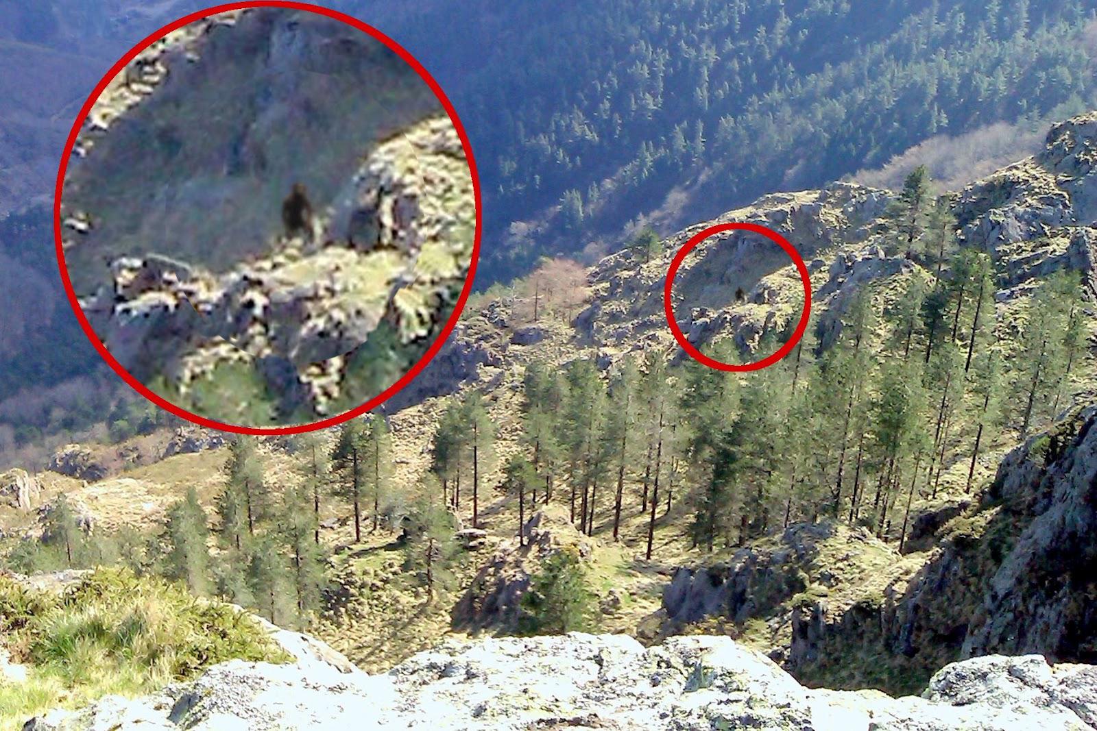Amazing Mystery Videos Werewolf Sighting Caught On Camera