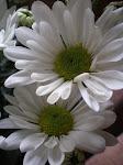 Flores e plantas me encantam!!