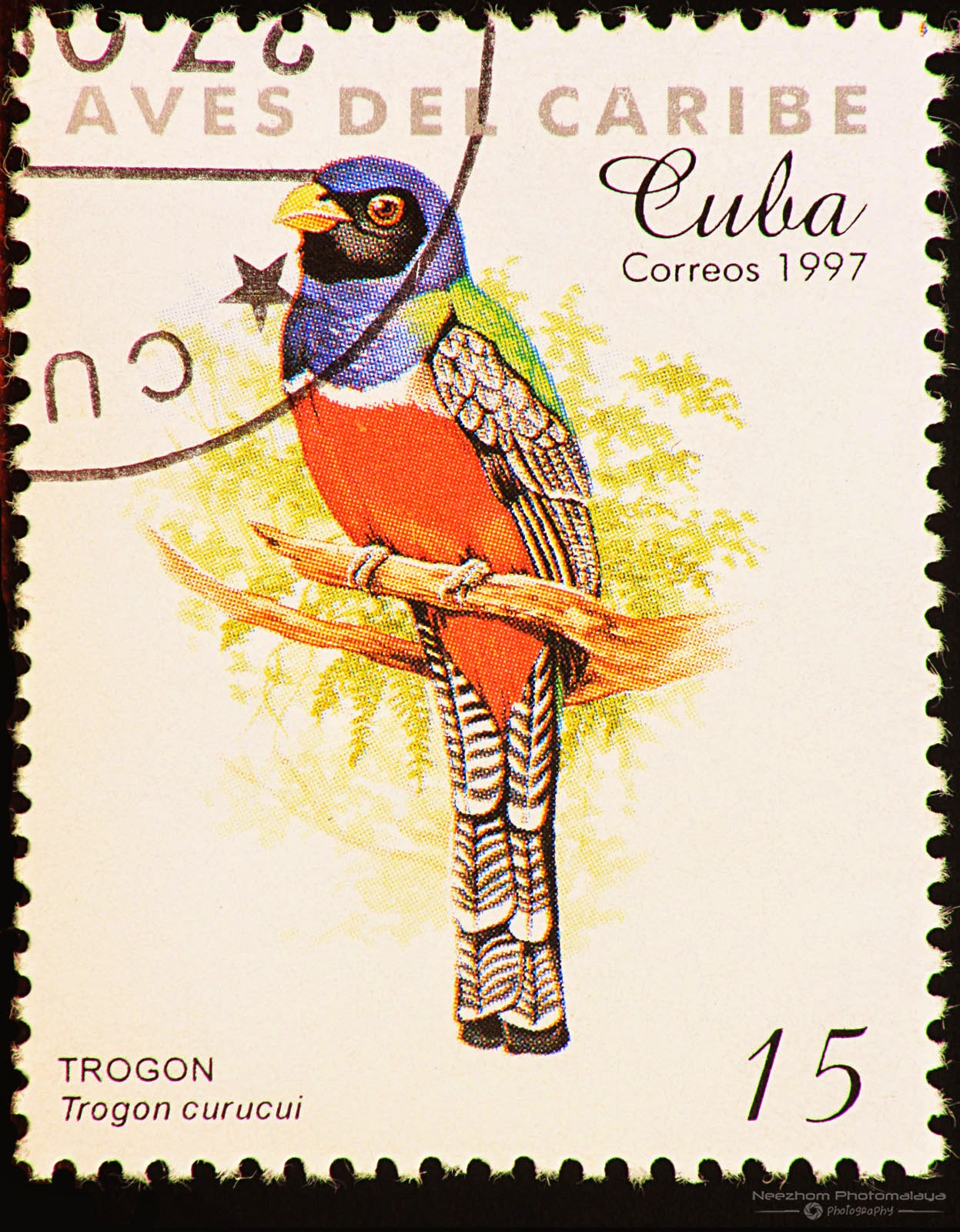 Cuba 1997 Birds of the Caribbean stamp - Blue-crowned Trogon (Trogon curucui) 15 c