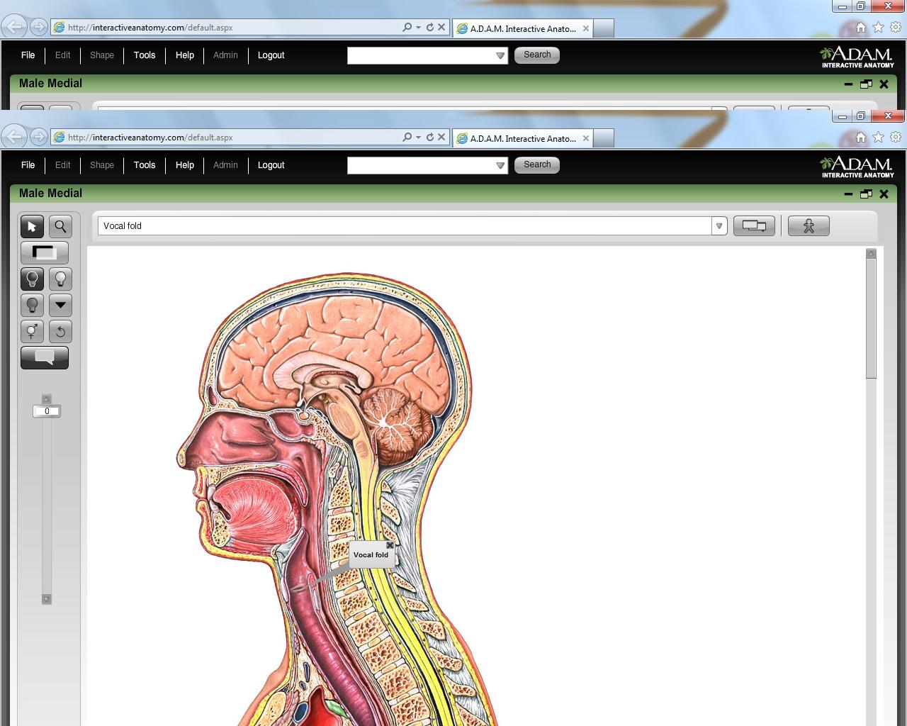 Adam Interactive Anatomy Gallery Human Anatomy Diagram Organs