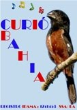 CURIÓ BAHIA