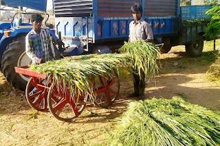 VSSM Helps Devipujak Tejmalbhai  For Livelihood