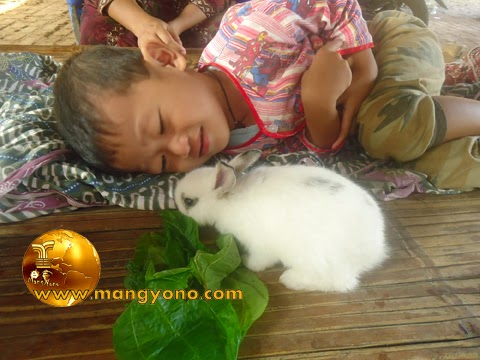 Foto Gigin sedang melihat anak kelinci makan daun.