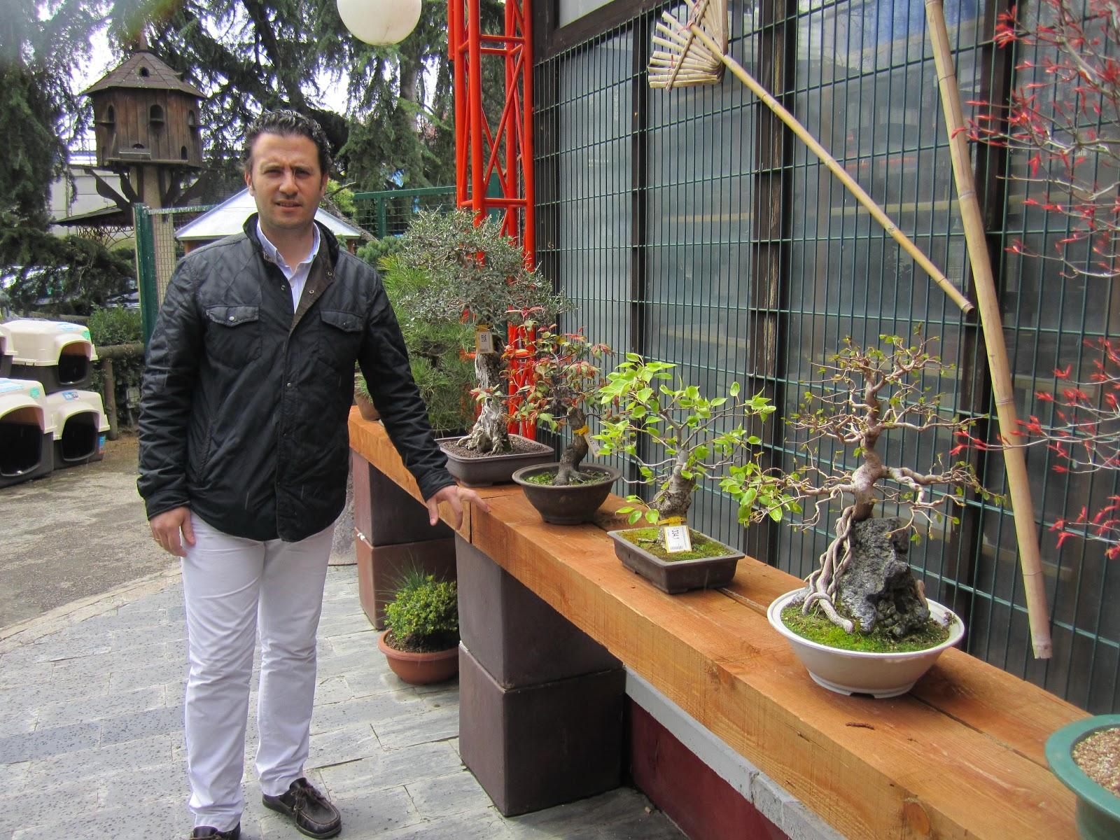 Mi pasion por el bonsai de viveros for Vivero los penotes