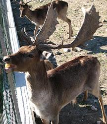 20.03.2011 - Biancade di Roncade