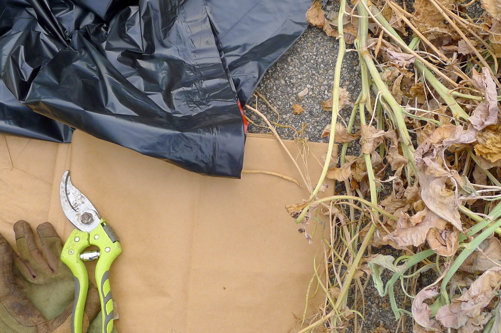 Fall Clean Up: what to compost, what to lawn bag and what to trash. gardening, urban farming