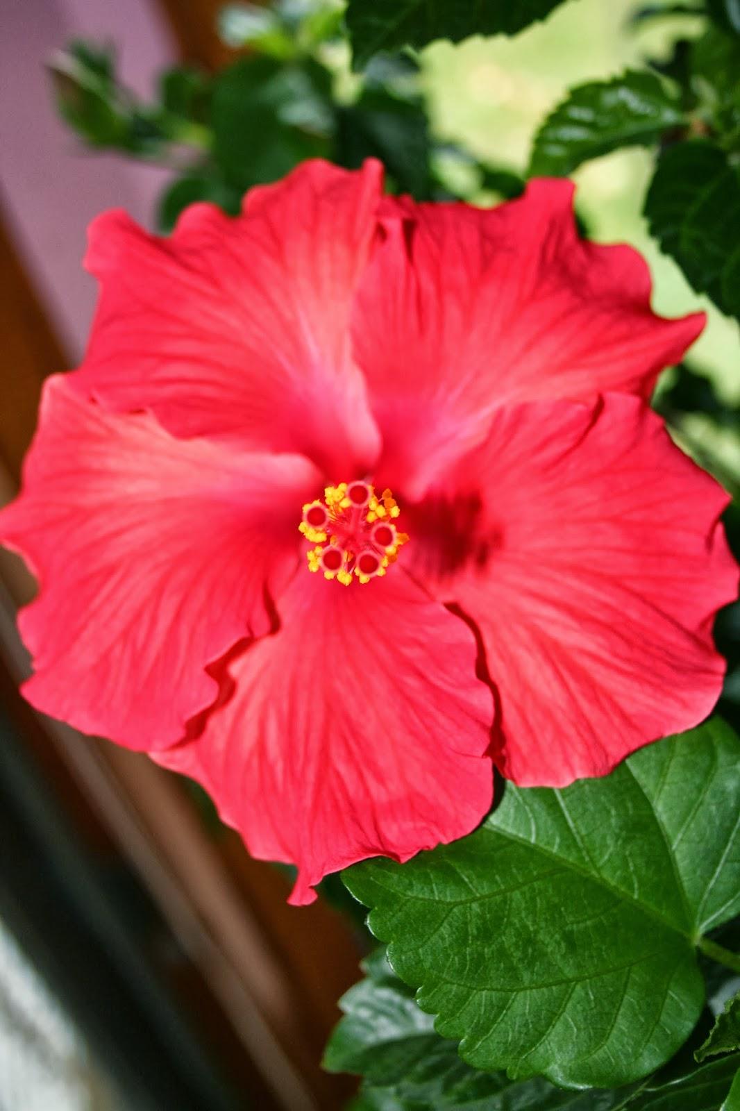 Tammys Craft Emporium Hibiscus Blooms And Herbs