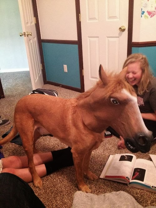 at maskesi takılmış At Kafalı Köpek