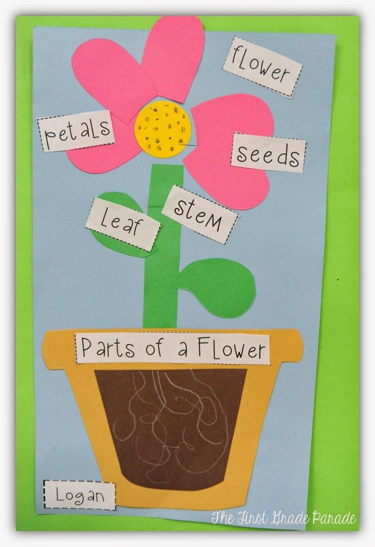 Plants Aplenty