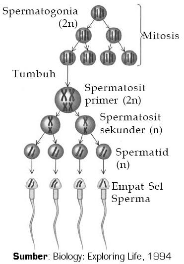 telka-v-teme