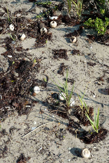 Download image Sea Turtle Eggs PC, Android, iPhone and iPad