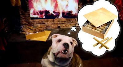 Dog Salon Living Room Japan Successful