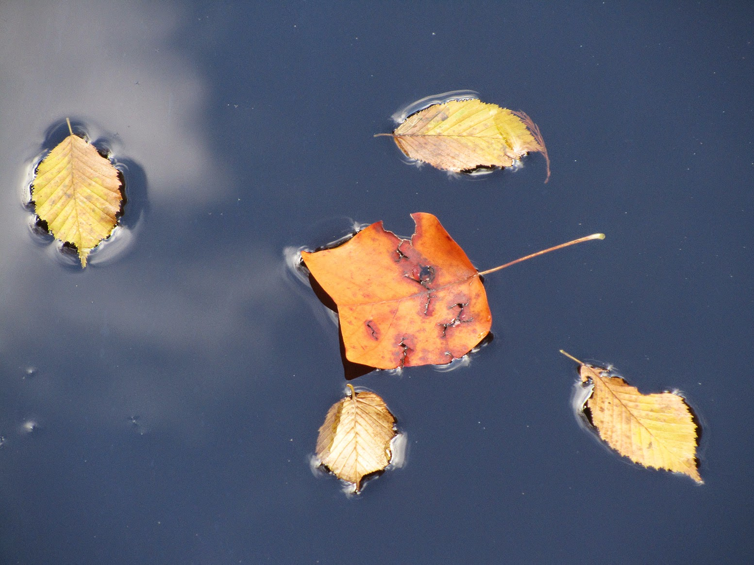 five floating leaves