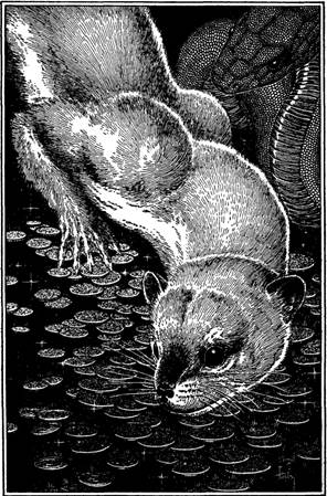 Illustration by Virgil Finlay for the Elmer Brown Mason story, The Albino Otter
