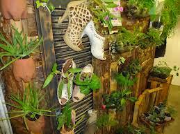 Orquídeas plantadas em calçados....Ameiiii...