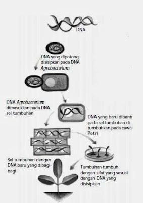 Pemanfaatan Bioteknologi Modern di Berbagai Bidang Kehidupan