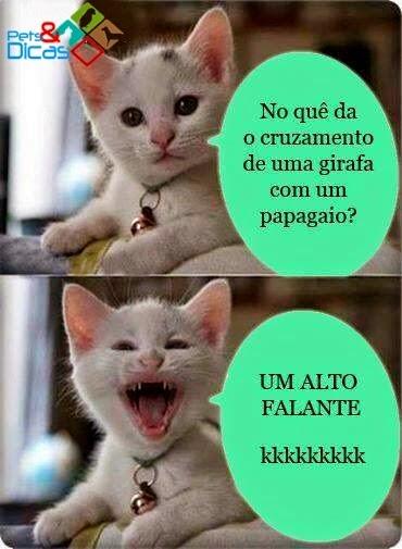 Figuras de piadas de gato para Facebook