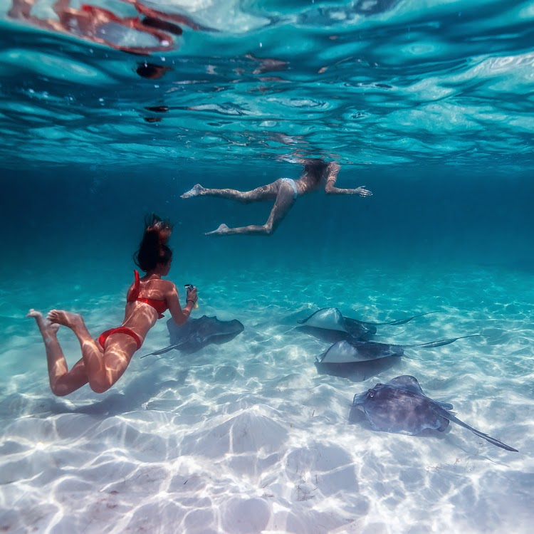 Swimming With Sharks And Stingrays All Things By Sjana