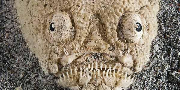 Wow, Inilah Monster Pasir Bawah Laut RI
