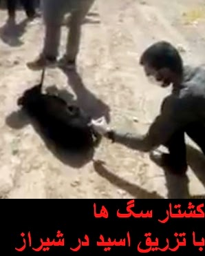 باز هم جنایتی دیگراین بار در شیراز...کشتار سگ ها با تزریق اسید در شیراز