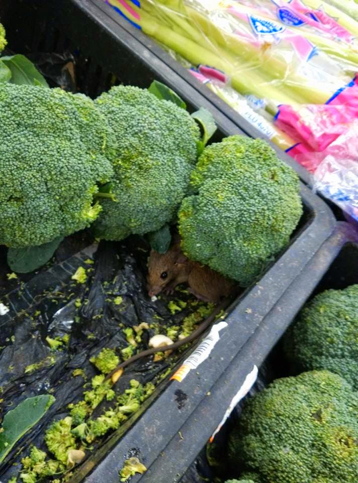 Rat Found Among Broccolis at Aeon Big Supermarket KL Mid Valley