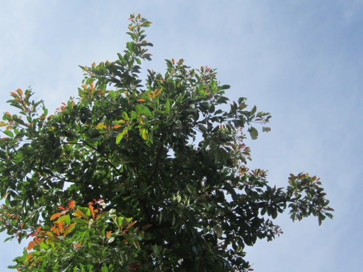 essay on trees in tamil