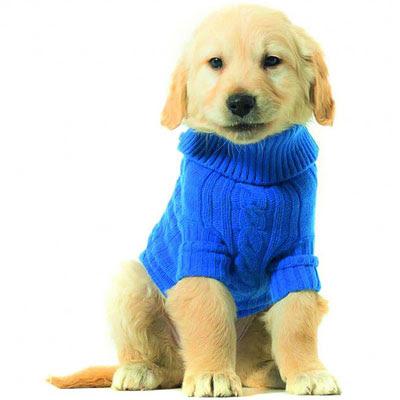 jerseys para perros