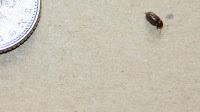 Scutigera Coleoptrata - House Bugs Identification