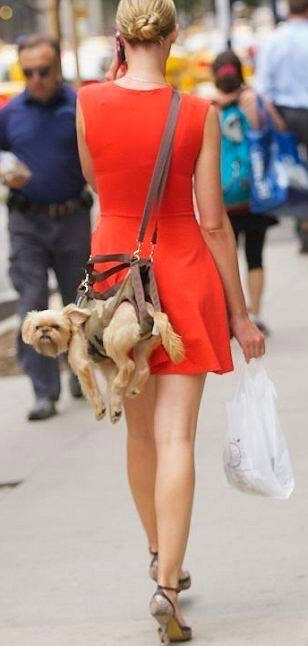 Funny idea to carry your pets with you | Shoulder bag for pets