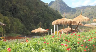 Holiday Fans travel the World RTW -family activities Budget Travel Doi Ang Khang North Thailand