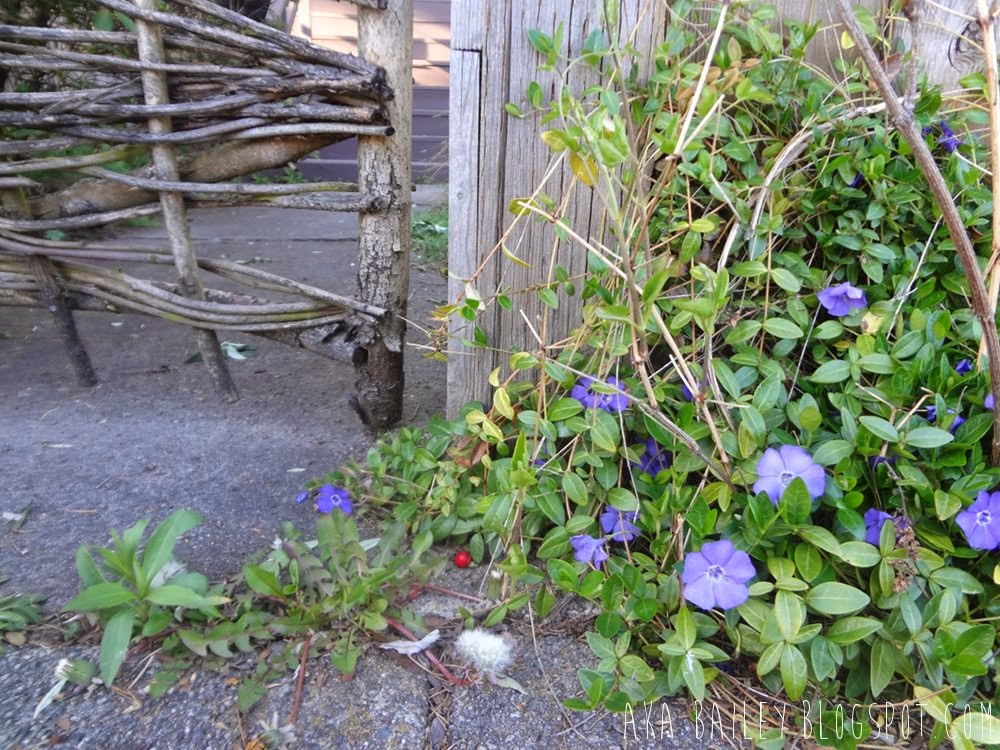 Purple flowers next to a wooden gate