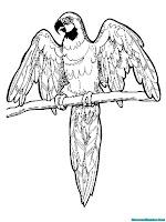 Mewarnai Gambar Burung Kakatua
