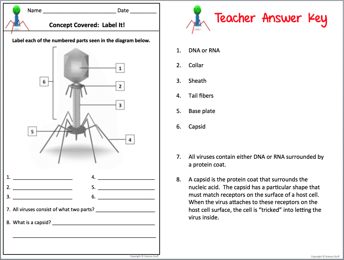 Amy Brown Science Interactive Notebooks Make Teaching Viruses and – Bacteria and Viruses Worksheet